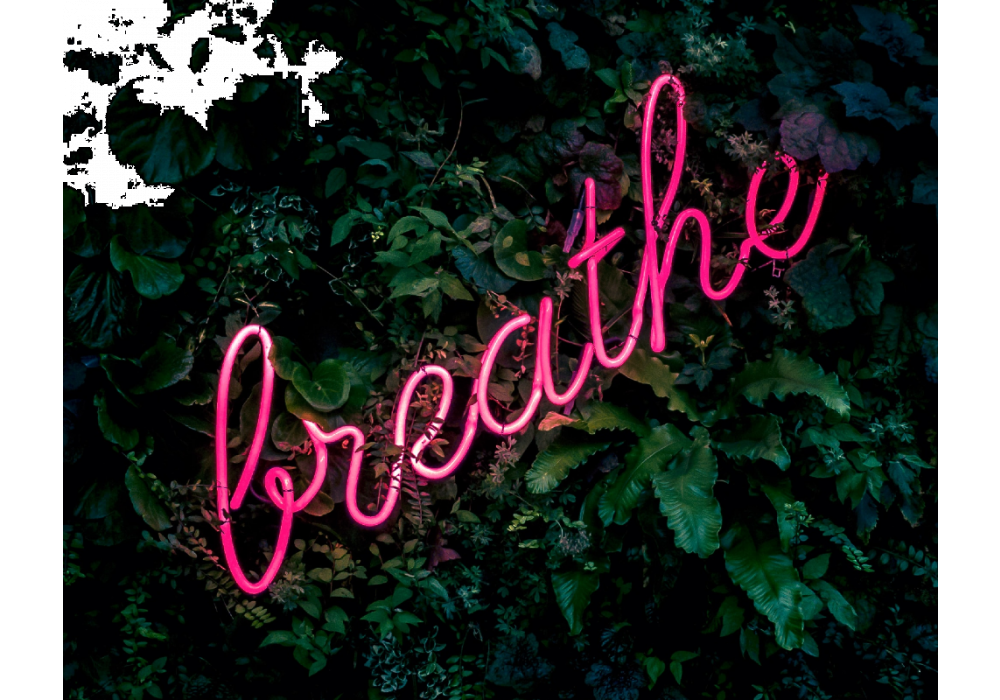 """green leafs with pink neon sign that says """"and breathe"""""""